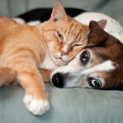 Pet Kits